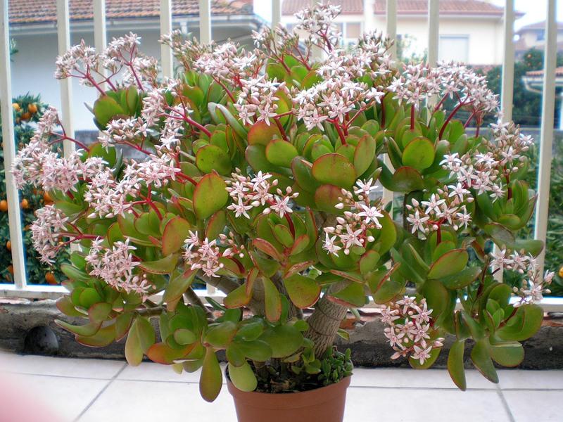 Народные приметы о комнатных растениях