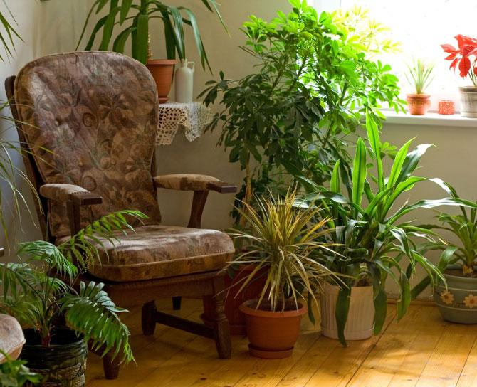 Энергетика домашних растений, домашние растения фото