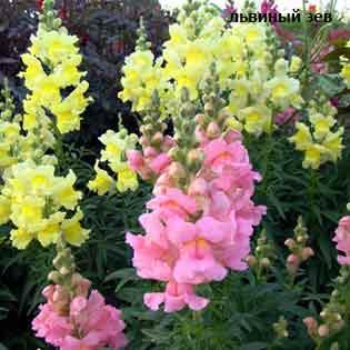 plants-mart14-7-(3).jpg