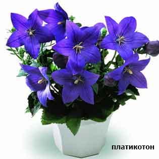 plants-mart14-7.jpg