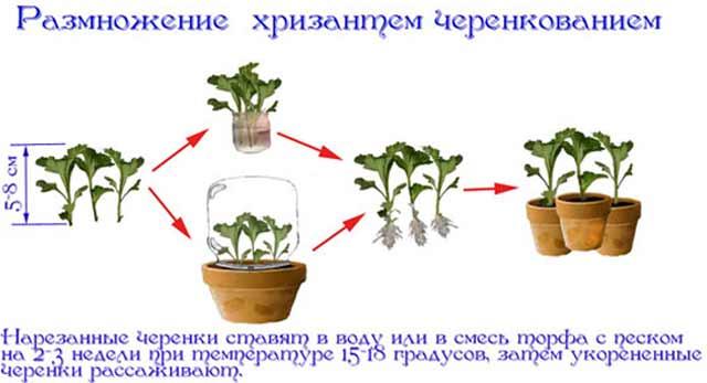plants-mart14-14.jpg