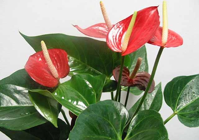 plants-mart14-19.jpg