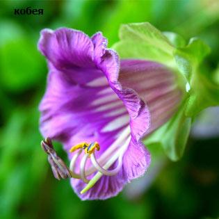 plants-mart14-7-(4).jpg