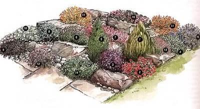 план альпийской горки с растениями фото