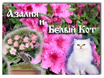 Сказка про цветы Азалия и белый кот