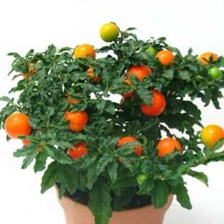 plants-mart14-3(3).jpg