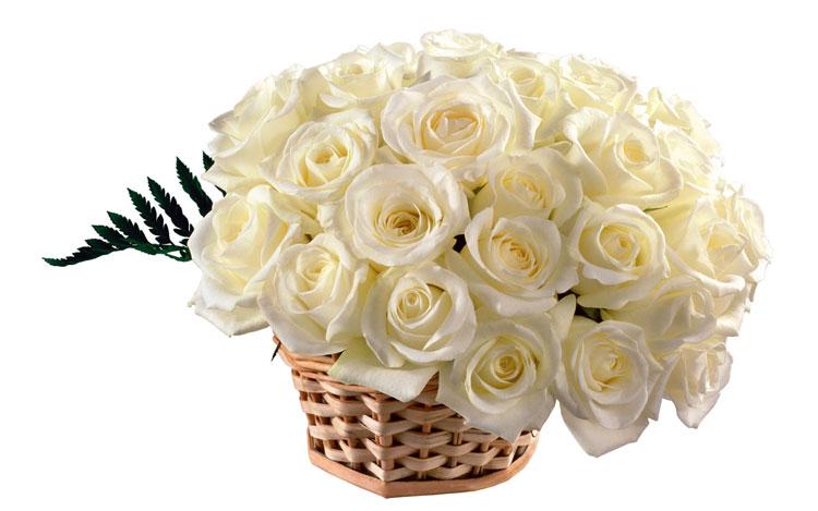 Букеты белых роз