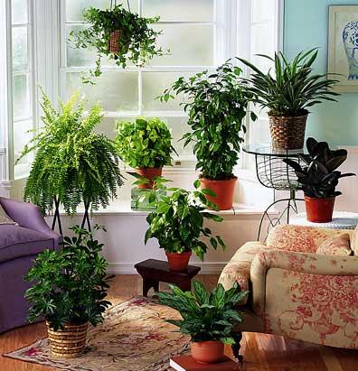 как озеленить квартиру