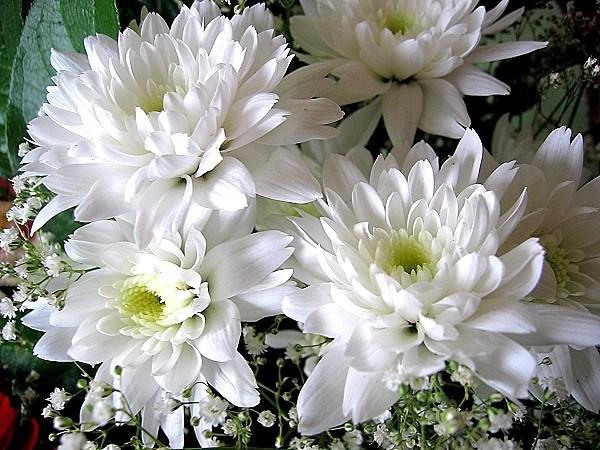 Раскраски цветы или букеты