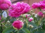 срезанные цветы уход