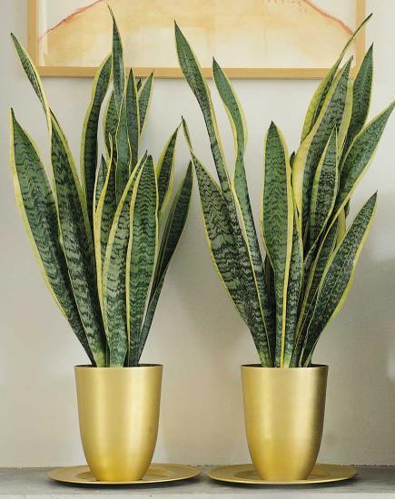 комнатные растения для начинающих