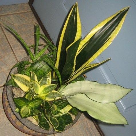 Самые неприхотливые комнакомнатные растения для начинающих