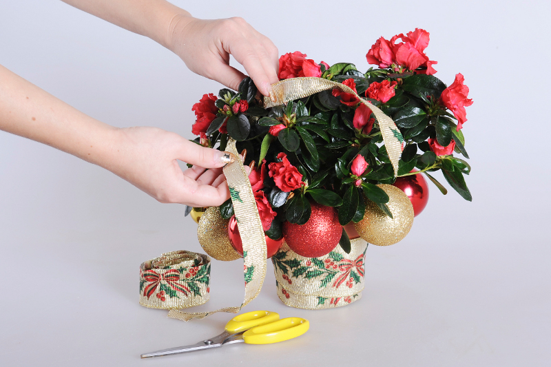 Мастер-класс: Украшаем комнатное растение к Новому году