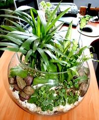 Комнатные растения и цветы в интерьере - аквариум