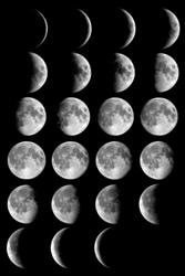 Лунный календарь для комнатных растений на 2013 год