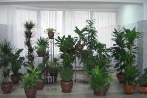 Лунный календарь для комнатных растений на ноябрь 2013 года