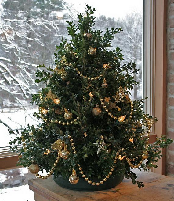 Самшит вместо елки