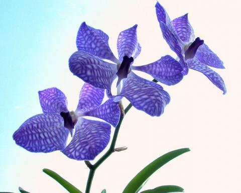 Орхидеи обои для рабочего стола