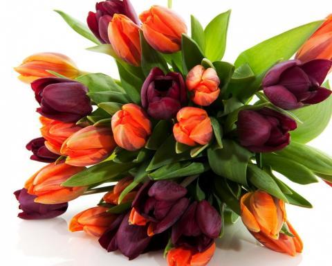 Тюльпаны цветы обои на рабочий стол