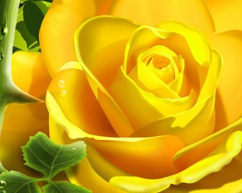 Розы обои цветы для рабочего стола