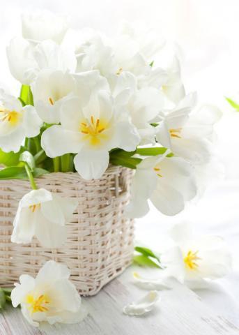 Белые тюльпаны фото