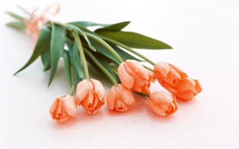 Букет тюльпанов фото