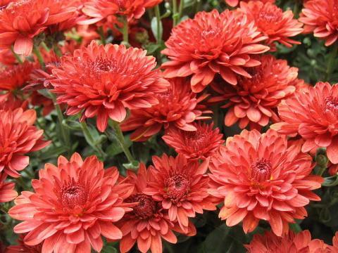 Названия картинки комнатных цветущих растений 11