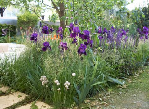 Фото цветок Ирис, или Касатик (IRIS)