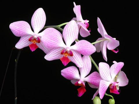 Фото цветов Орхидея (Orchidaceae)