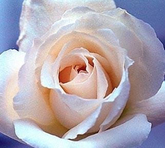 Роза Жюль Буше