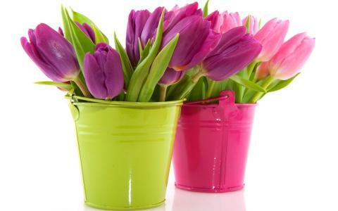 Тюльпаны цветы - обои на рабочий стол