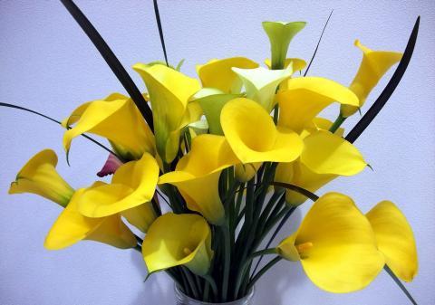Фото очень популярных цветов калл для свадебных букетов с широчайшим диапазоном желтых тонов - от светло-кремового до насыщенного янтарного