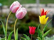 сказки про цветы