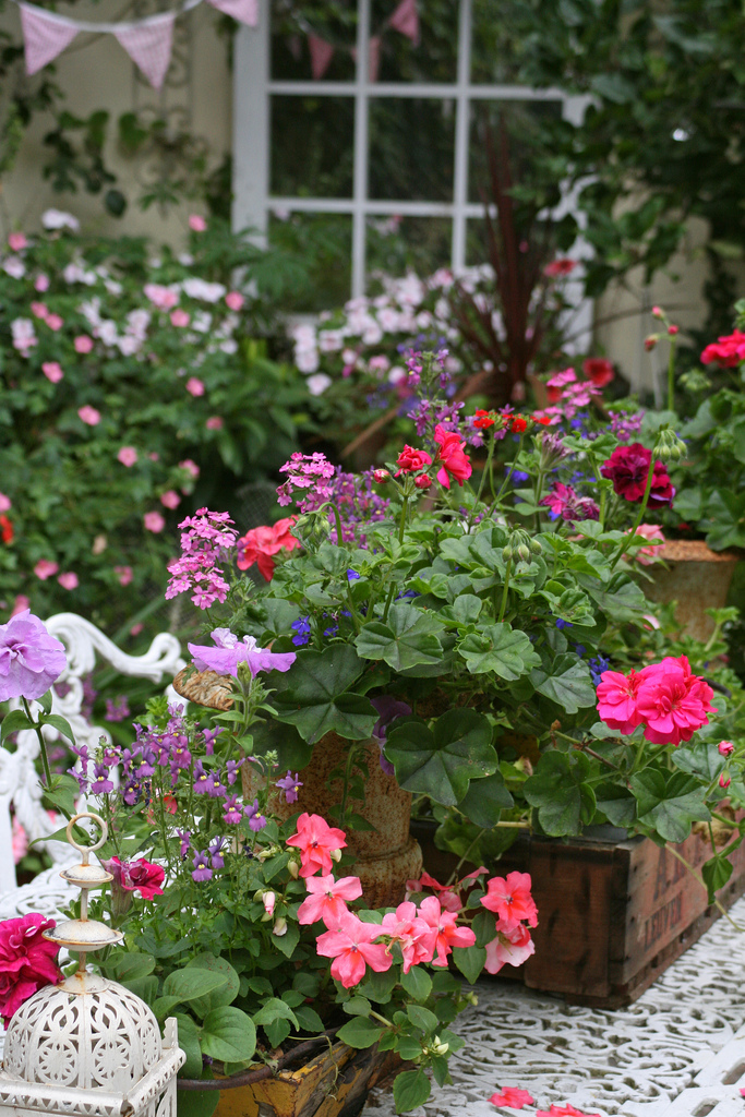 цветы в горшках фото