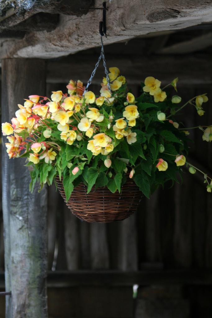 цветок в горшке фото