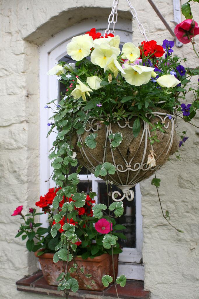 цветы в саду фото