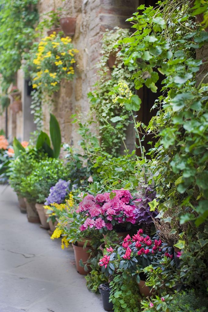 уличные цветы фото