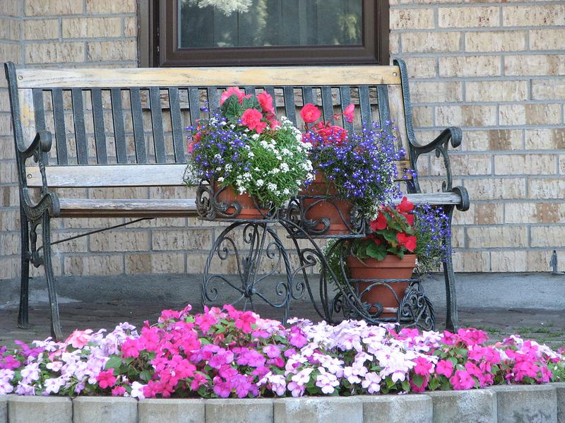 домашние цветы фото