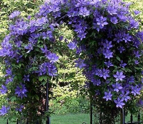 Вьющиеся растения и цветы
